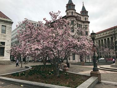 Beautiful trees in Washington, D.C.